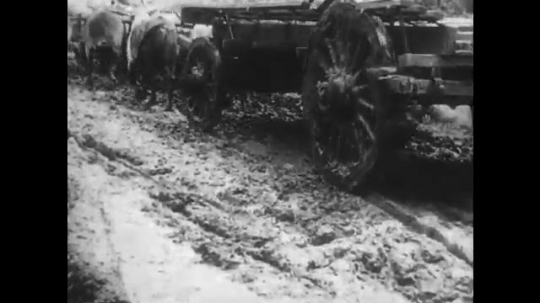 AFRICA: 1930s: cows pull cart across mud. Expedition vehicle skids on muddy track. Vehicle drives through field of locusts