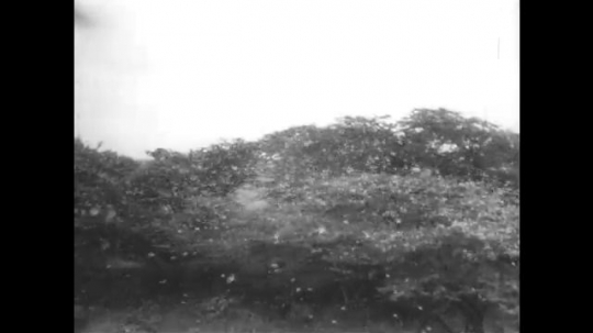 AFRICA: 1930s: swarm of locust in fields and sky. Explorer walks through swarm of locust.
