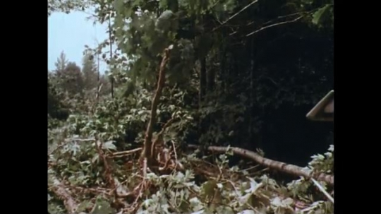 UNITED STATES: 1970s: machine clears forest floor. Caterpillar treads on vehicle in woods. Machine knocks down tree