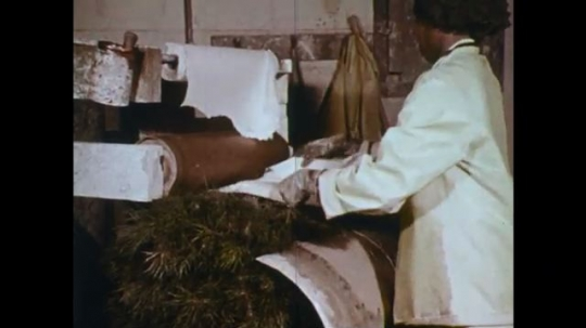 UNITED STATES: 1970s: lady wraps plants in paper. Vehicle moves plants in production unit.