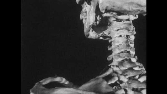 1950s: Neck vertebrae of model skeleton. X-ray of person moving neck. X-ray of person passing a glass bottle. X-ray knees walking. X-ray of feet walking.