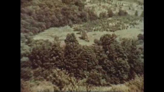 1950s: Aerial view of forest. Dead corn plants in field. Colorful leaves on autumn trees.
