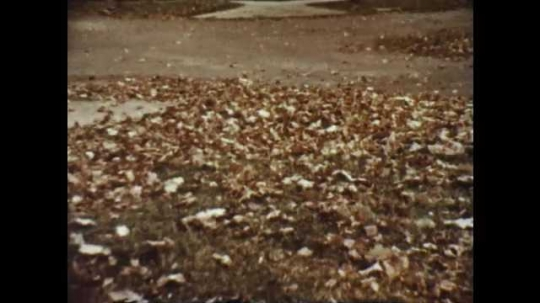 1950s: Leaves blow along the ground in park. Man rakes leaves amid burning piles of leaves. Man places leave around base of bush. Man shovels dirt onto fallen leaves.