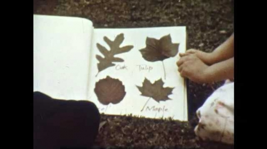 1950s: Boy and girl flip through leaf scrapbook on lawn. Leaves sway in the breeze.